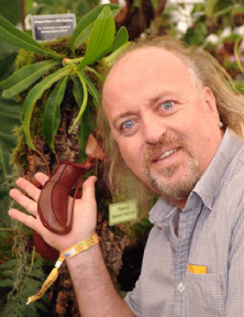 NMC385 Nepenthes 'Bill Bailey' XL